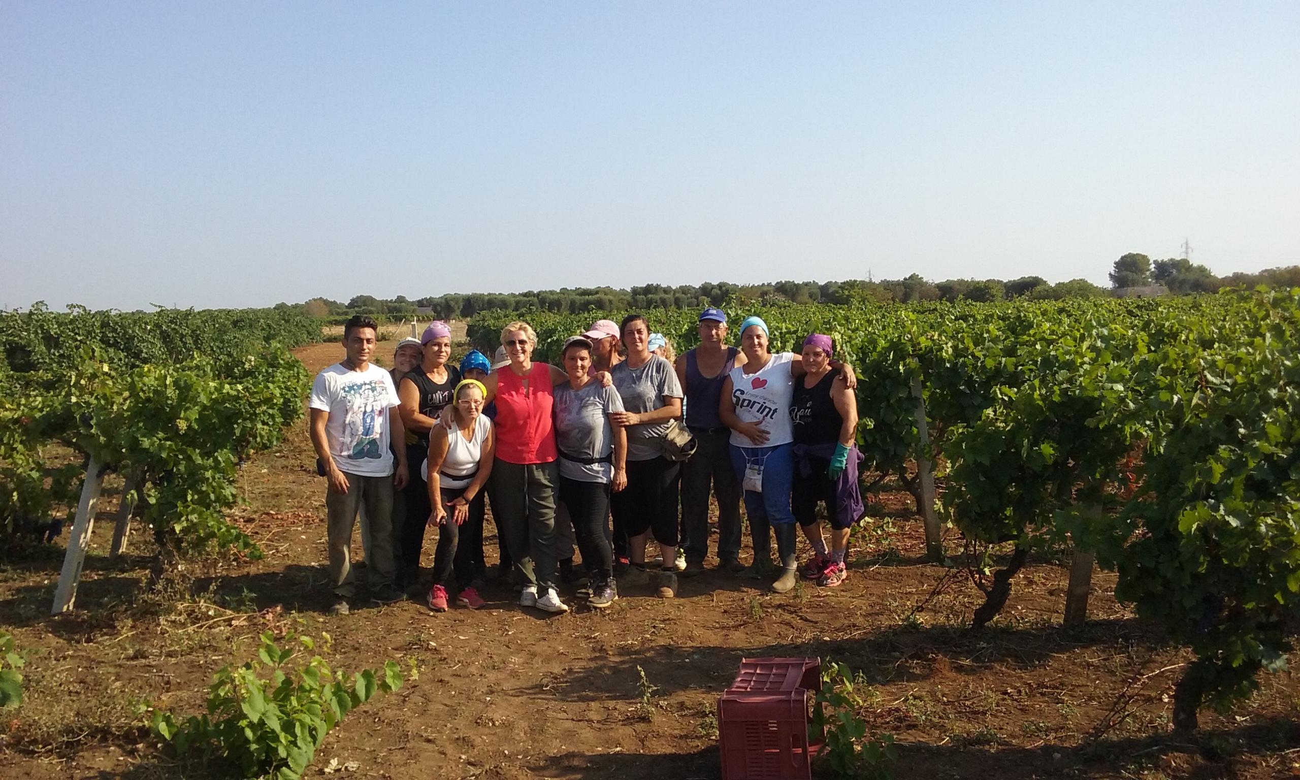 Vendemmia 2016 in Puglia da Terribile
