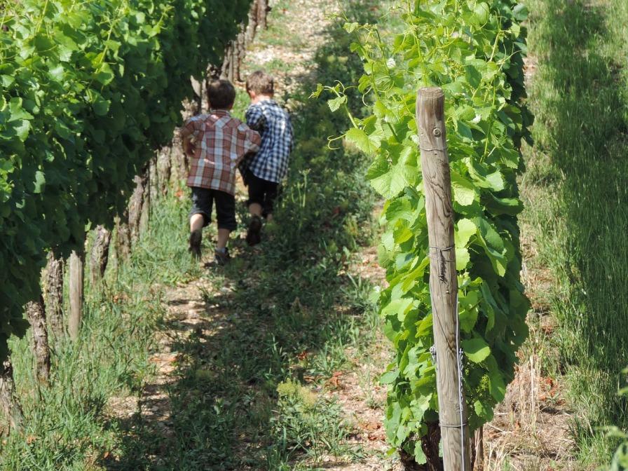 Sostenibilità del vino