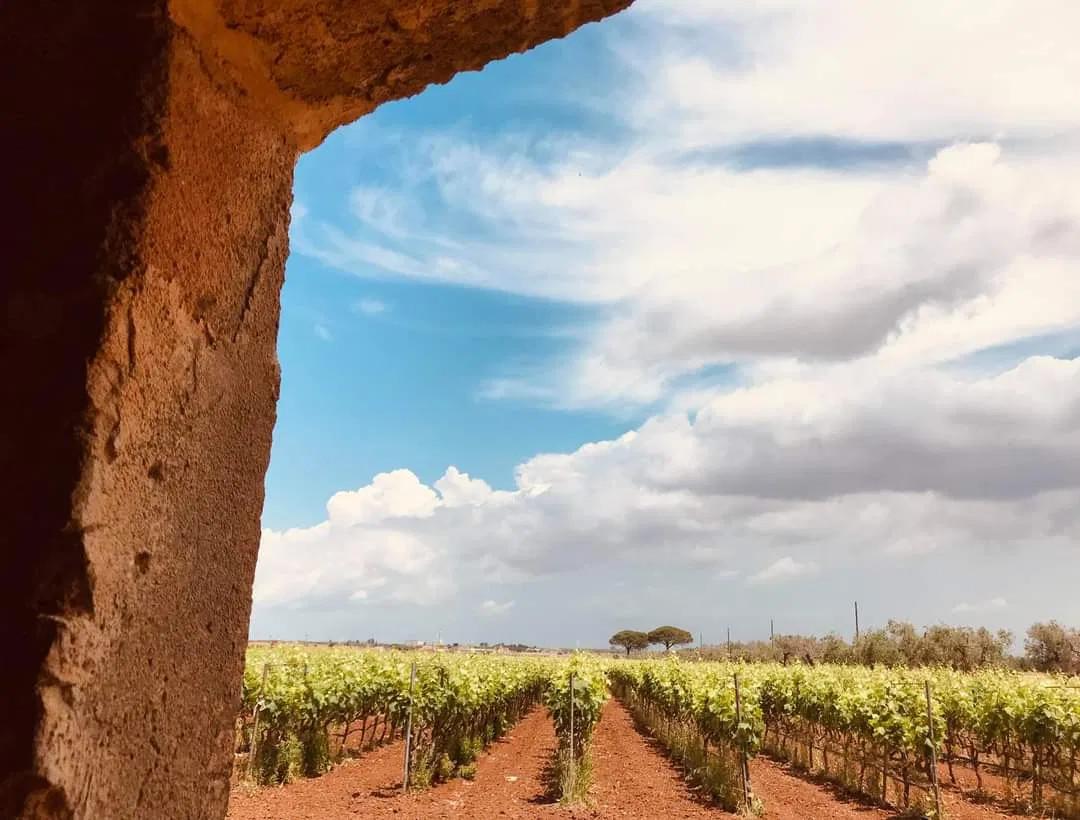 #winewindow foliage – l'autunno delle Donne del Vino – ottobre 2020
